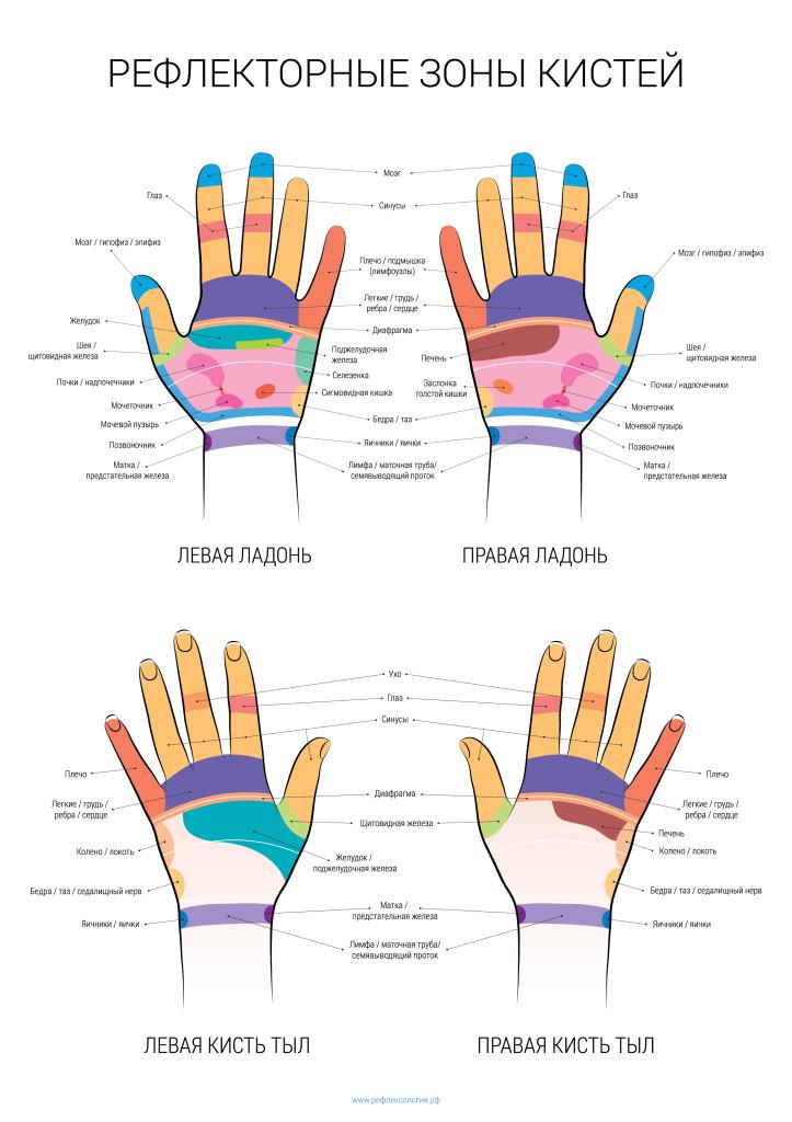 рефлекторные зоны рук